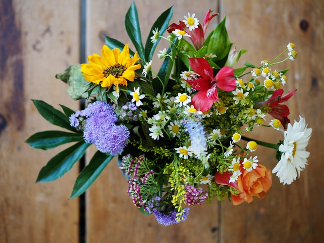 7 Best Plants To Gift Your Loved One On A Special Occasion